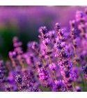 Purple Expression