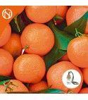 Recarga ambientador coche Mandarina